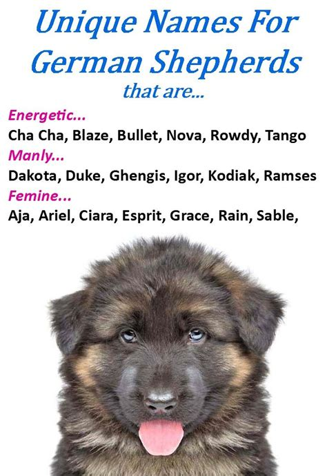black puppy names best 25 names ideas on puppies