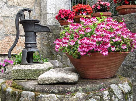 plantas para patio interior fotos gratis planta c 233 sped flor patio interior