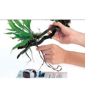 Ada Wood Tight By Zoomart utiles plantas y pegar plantas y musgos