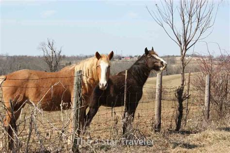 rescue kentucky for the of travel animal encounters the 3 traveler