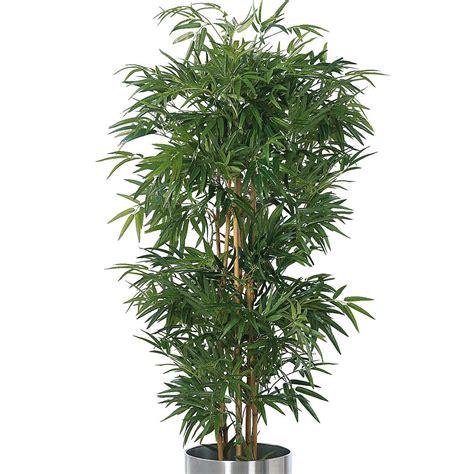 Pflanzen G Nstig Kaufen 126 by Pflanzen G 252 Nstig Kaufen 252 Ber Shop24 At Shop24