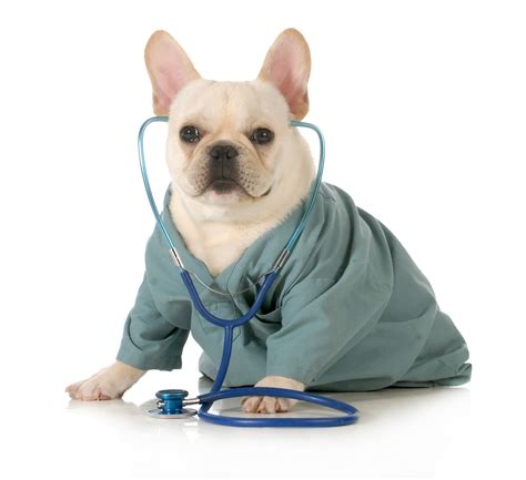 house paws mobile vet paws around town mobile veterinary hospital veterinarian in pets world