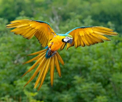imagenes de animales jungla hermosas im 225 genes para descargar gratis de animales de la