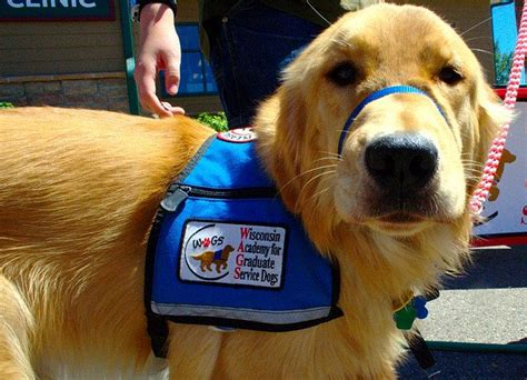 dogs for ptsd trained service dogs reduce ptsd symptoms