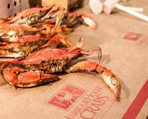 harbor house crabs up to 42 off steamed maryland blue crabs from harbour house crabs regional and