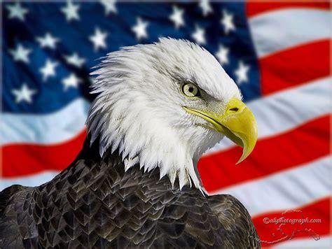 Kkpk My Days In America escrita global eua 1 nascimento e afirma 199 195 o de um quot imp 201 quot