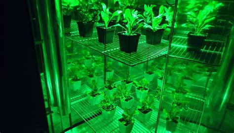 green colored why use green colored grow lights t5 grow light fixtures