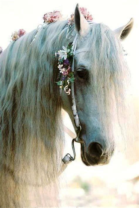 girly horse wallpaper matrimonio a tema boho chic hippy boh 233 mien fate l