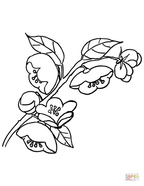 coloring pages of apple blossoms disegno di melo in fiore da colorare disegni da colorare