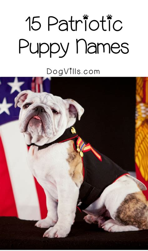 patriotic puppy names 15 perfectly patriotic puppy names to show your of country dogvills
