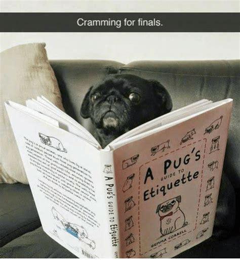 a pug s guide to etiquette 25 best memes about memes memes meme generator