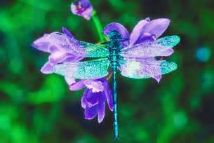 what color are dragonflies dragonfly medicine doowans news events