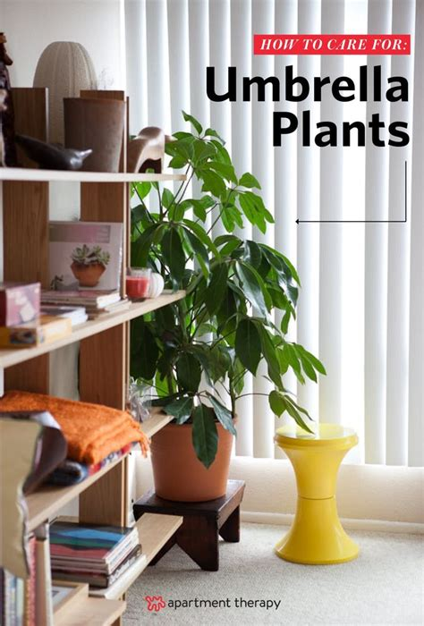 easy apartment plants 579 best images about plant filled homes on pinterest