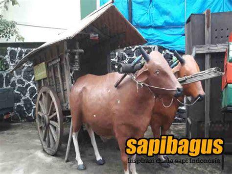 Jual Bibit Sapi Malang koleksi patung sapi di musium angkut batu malang sapibagus