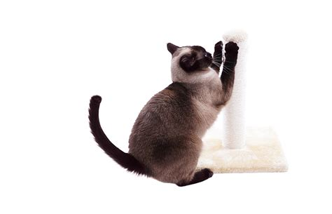 How To Prevent Cat From Scratching by How To Prevent Cats From Scratching In Undesirable Areas