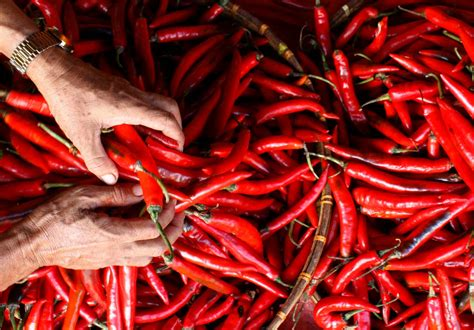 cabe merah besar pepper i d the pepper