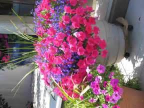 annuals perennials gloucester ma flowers in ipswich ma