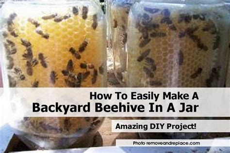how to easily make a backyard beehive in a jar