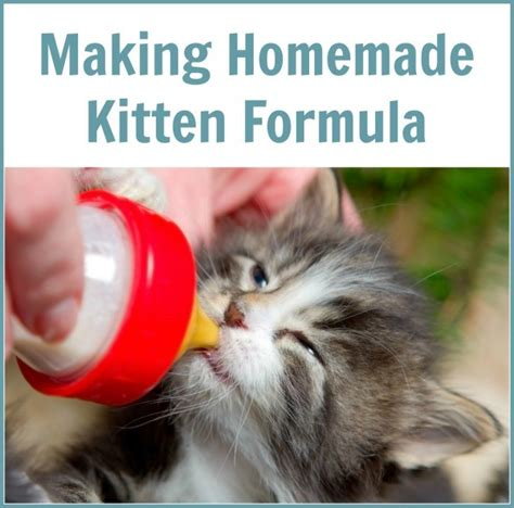 how to make puppy formula emergency kitten formula how to make kitten formula kitten glop kitten milk