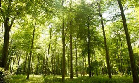 the angsana tree singlish join oxford exactly how many trees are left on earth viralportal