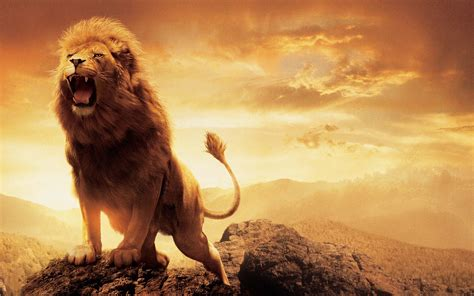 narnia film hd narnia lion aslan wallpapers hd wallpapers id 15038