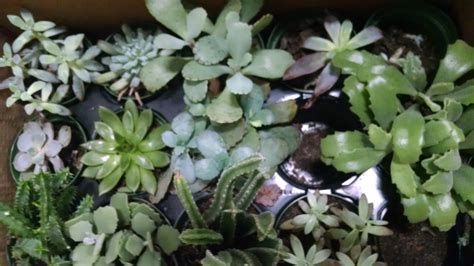 Succulents Plants | the ultimate guide to succulents