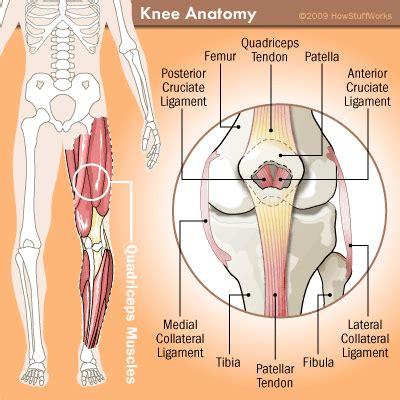 tendons in the knee diagram anatomy of the knee howstuffworks