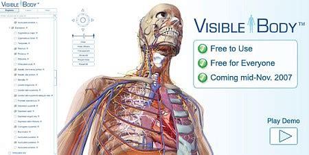 corpo umani organi interni modello 3d corpo umano