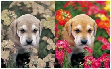 dogs vision vision compared to human vision www pixshark images galleries with a bite