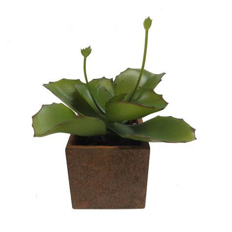 Paper Plant Pots - 6 quot agave succulent plant in paper mache pot