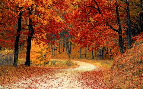 fall autumn autumn fall season wallpapers hd wallpapers
