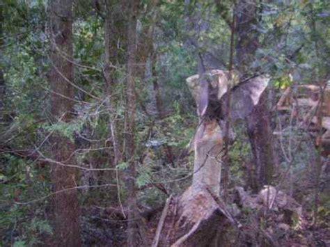 imagenes hadas reales el bolson belenus bosque de hadas y duendes youtube