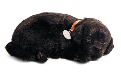 petzzz puppy petzzz zwarte labrador retriever puppy kalenderwereld nl