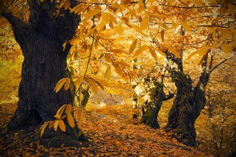 imagenes de otoño en mendoza oto 241 o casta 241 os fotos de a cada palabra una foto