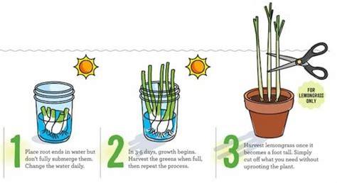 coltivare cipolla in vaso come coltivare frutta e verdura in casa partendo dagli