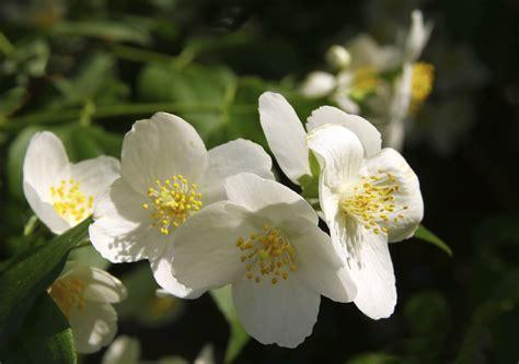 Garten Blumen Jetzt Pflanzen by Geh 246 Lze Pflanzen Jetzt Im Herbst Garten News Garten