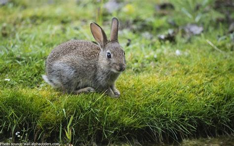 new year rabbit facts interesting facts about rabbits just facts