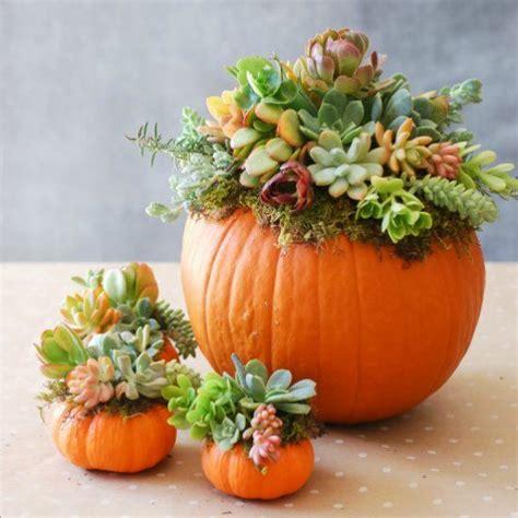 pumpkin spice bud quot pumpkin spice quot up your autumn rose bud flowers
