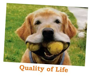 what is the lifespan of a what is quality of for pets tucson vet northwest pet clinic