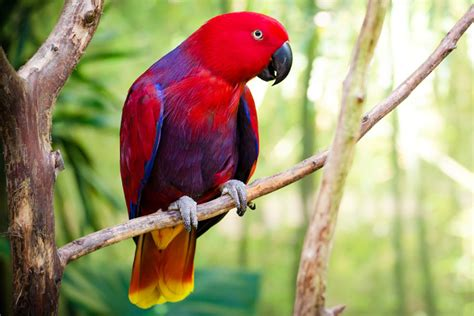birds pictures wings the bird park places to see in hyderabad ramoji