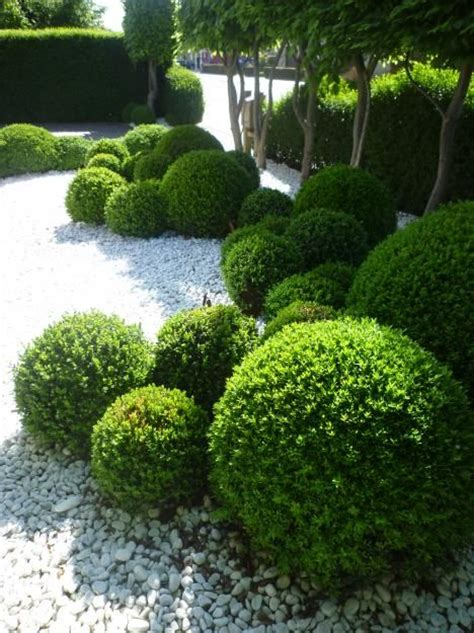 Landscape Pictures With Balls Best 25 Buxus Ideas On Buxus Sempervirens