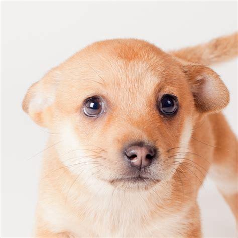 spca puppies image gallery spca puppies