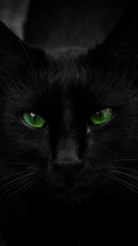 cats animals black cat green eyes wallpaper