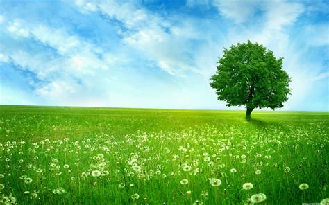 beautiful tree beautiful tree in the field high definition wallpapers