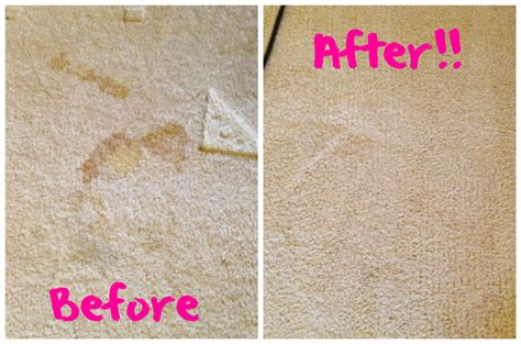 rug doctor before and after carpet cleaning made fabulous with rug doctor