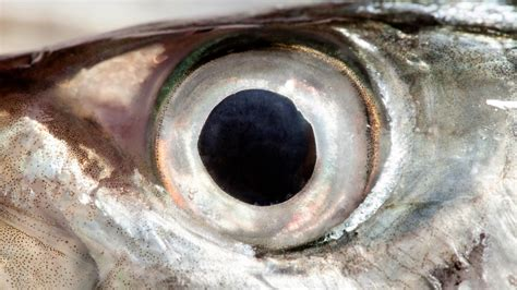 fish eye it s a myth you won t see better by fish