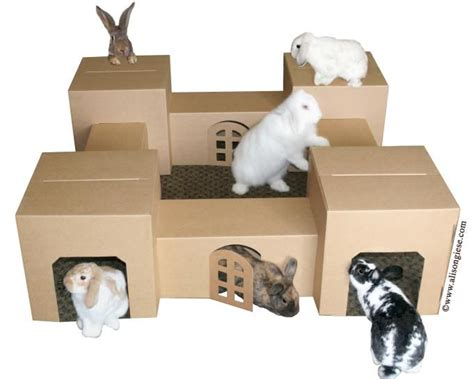 Boxes For Dogs Picture More - cats rabbits more adoptions education pet