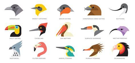 what do cracker beak birds eat pecking order audubon