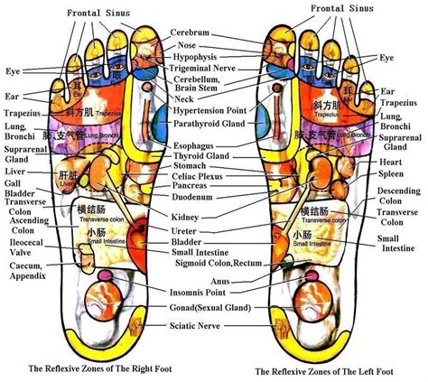 acupressure diagram of pressure points neemnet acupressure points and exercise