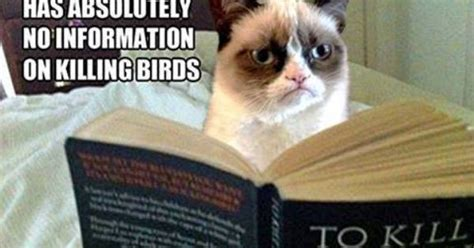 To Kill A Mockingbird Cat Meme - to kill a mocking bird lol pinterest grumpy cat